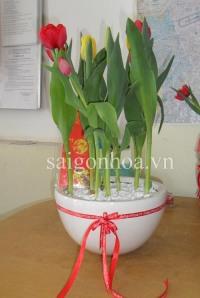 hoa tulip ghep chau