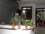 hoa tulip vang (7)
